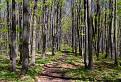 Strážovským lesom