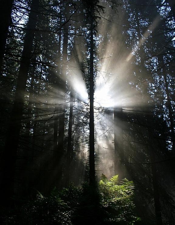 Zobúdzajúci sa les