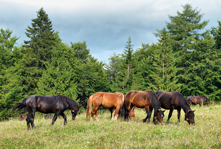 Já videl divoké koně
