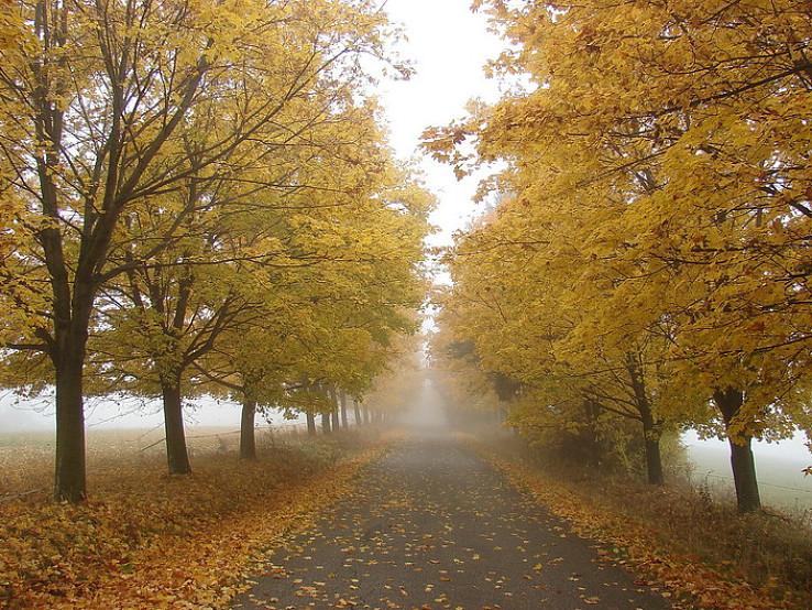 Javorová jeseň