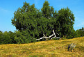 Bežiaci strom