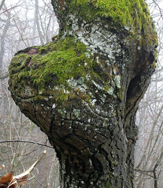 Strom strážca