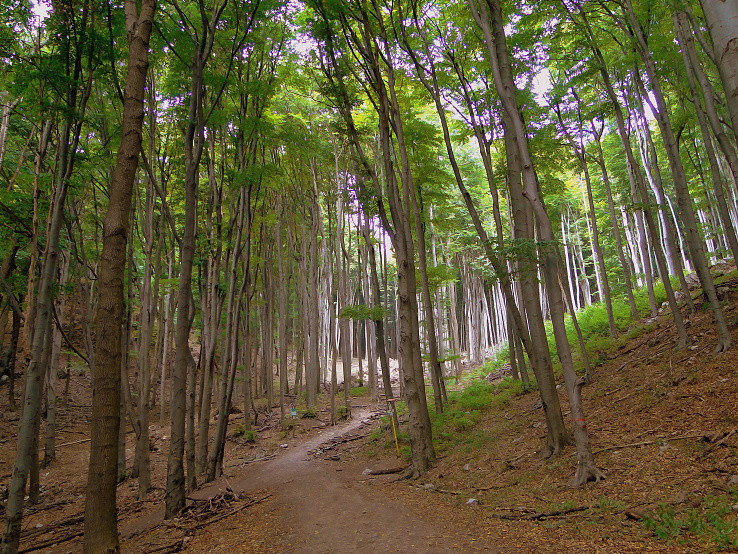 Čertov les
