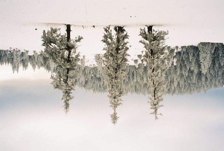 3 stromy