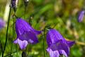 Kvetnica II