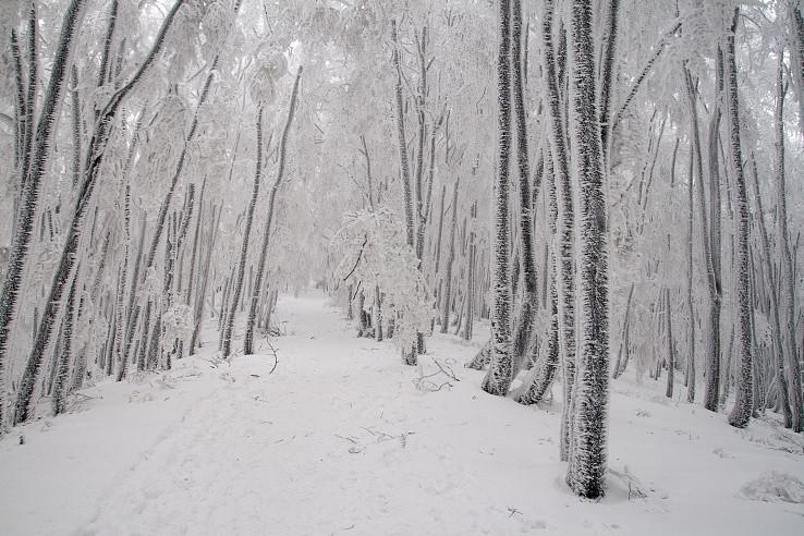 zamrznutou krajinou...