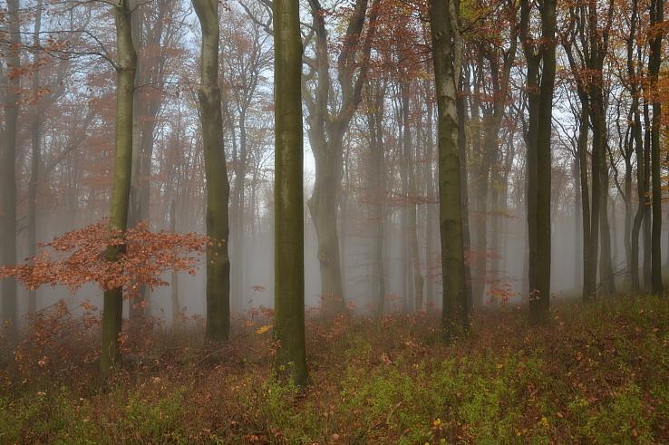 V hustej hmle