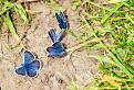 Motýle...