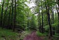 . . . v lese pod Benátom