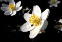 Zatmenie kvetu