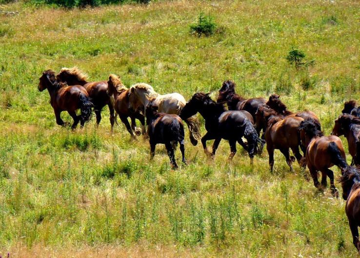 Nad stádom koní...