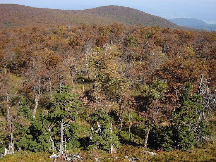 Jesenný bukový les