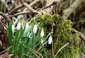 Jar pod Kobylou