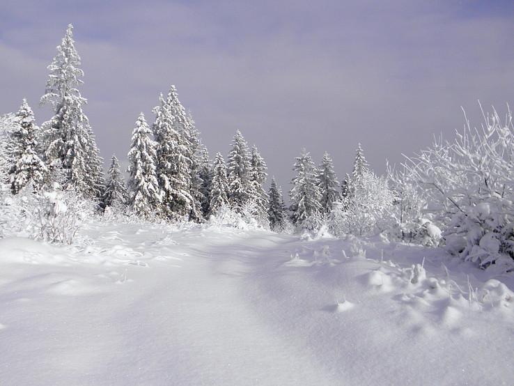 Zimná paráda