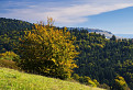 Klbko strapatô jesennô