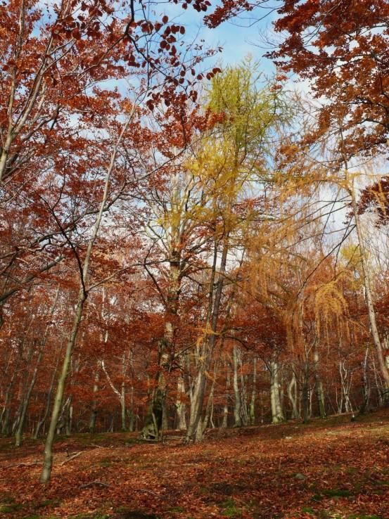 Jeseň pod Inovcom