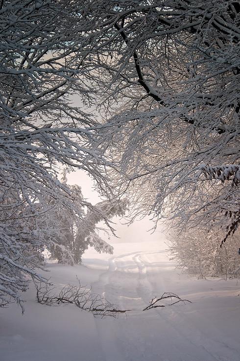 Zimná