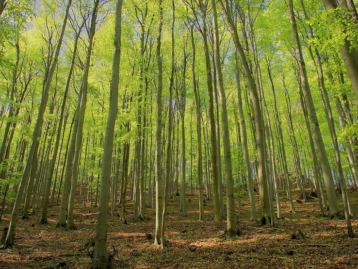 Taký obyčajný les