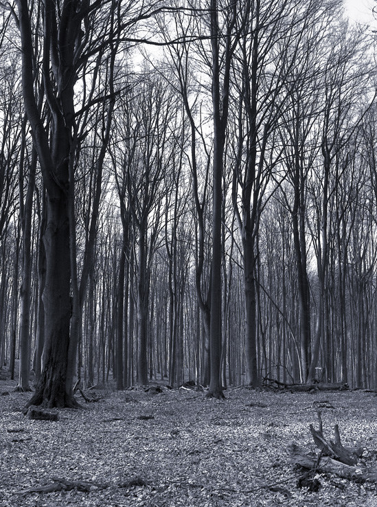Čiernobiely les
