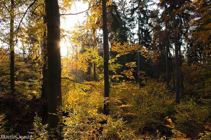 Jeseň v Chvojnici