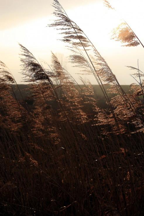slnko v tráve