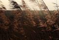 slnko v tráve / 1.0000