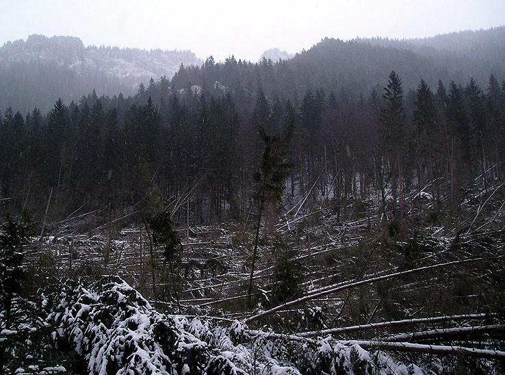 Polom v Prosieckej doline
