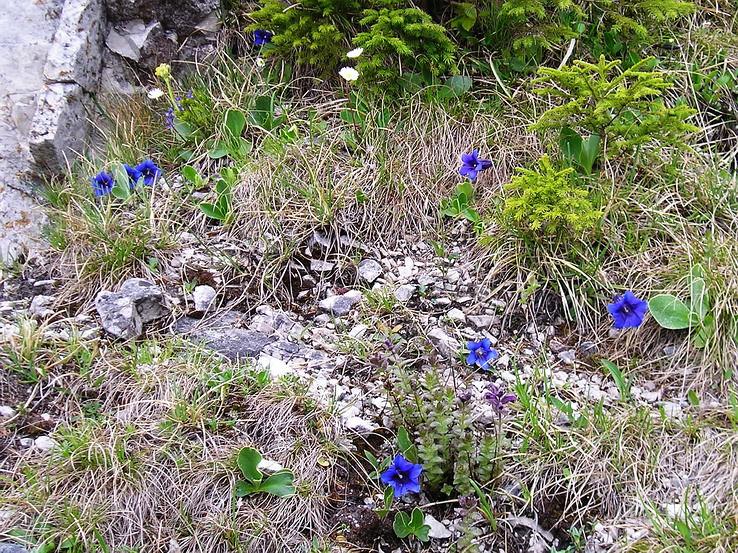Tlstá v modrom