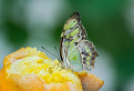 Z motýlej záhrady