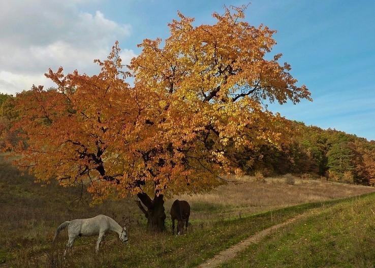 koníky..