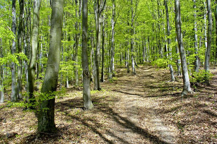 Cesta v zelenom nebi
