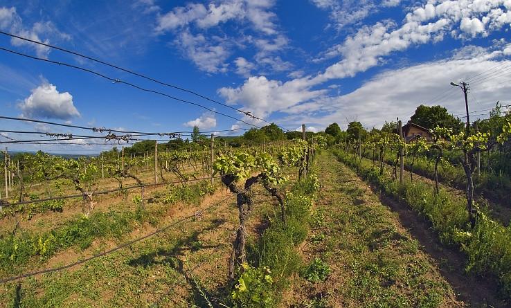 devinsky vinohrad