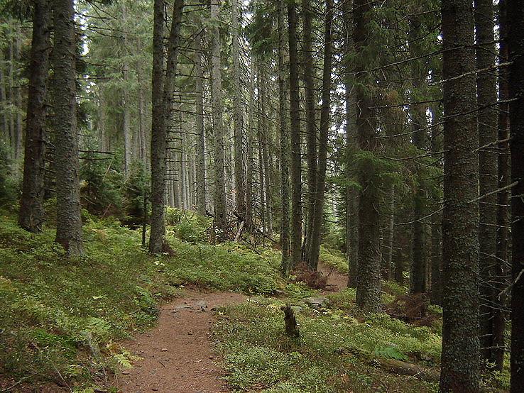 V lese Martalúzky