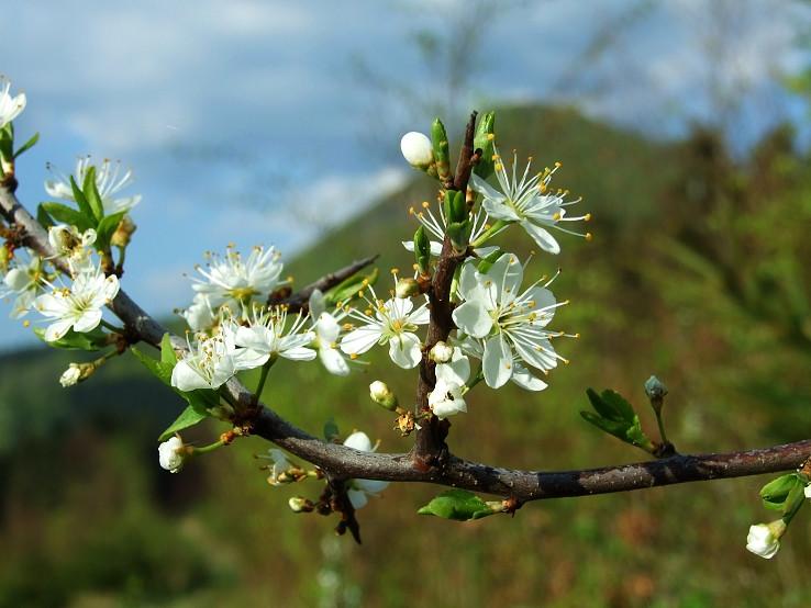 Jar v Manínskej Tiesňave