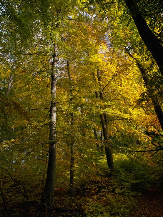 Jesenným malokarpatským lesom.