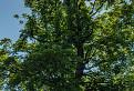 Strom a veža