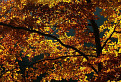 V zajatí jesenných farieb  / 1.0556