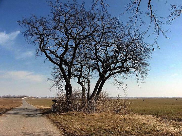 Jar prichádza na Dolné pole pri Rusovciach.