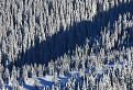 Tieň v lese pod Babkami / 1.0952
