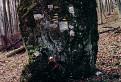 trampský symbolický cintorín