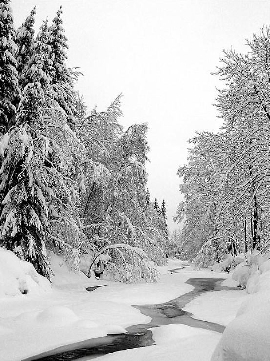 Zimná Kysuca