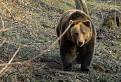 Medveď - Suchá dolina