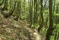 Cez bukový les