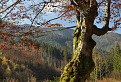 Strom v Porubskej doline.  / 1.0000