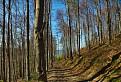 V lese nad Prakovcami