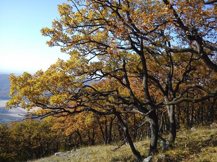 jesenne buky na Velkom Lubine