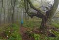 V Tolkienovom lese