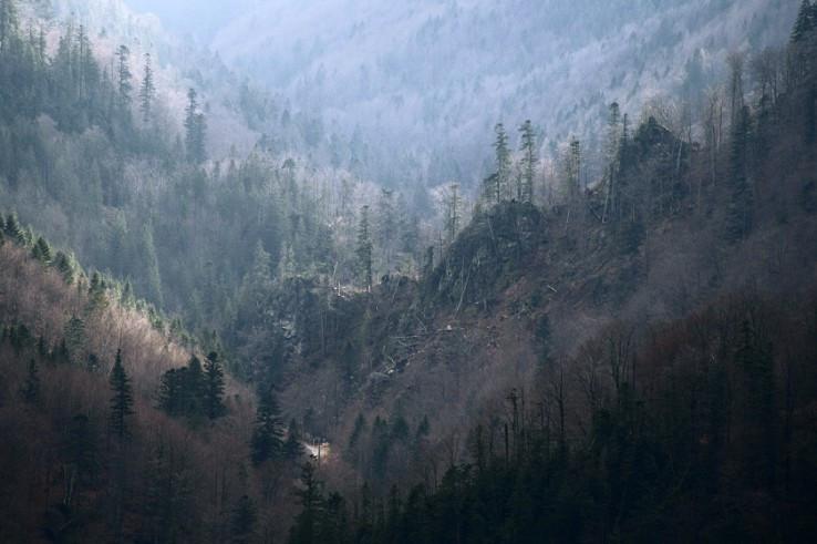 Novembrová Bystrá dolina