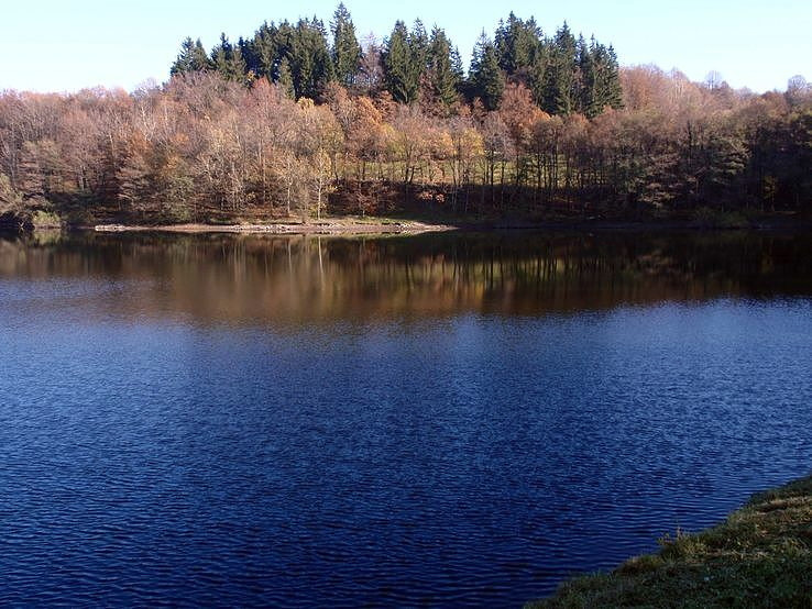 lesík nad jazerom