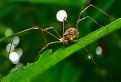Pavúčik / 1.0000